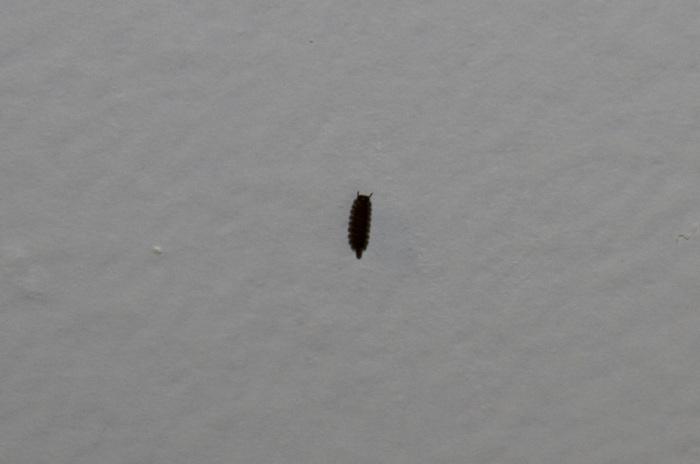 Kleine Zwarte Beestjes In Badkamer – Huishoudelijke Apparaten Gallery