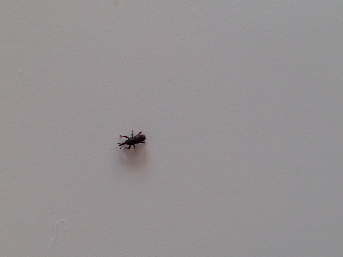 Hoe krijg ik deze snuitkevers uit mijn huis ik heb een vraag 2017 - Mini badkamer m ...