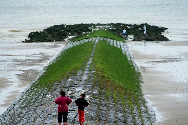 比利时海岸边防波提和港区码头采的野生淡菜贝类不能吃